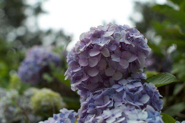 http://chinoken.net/wordpress/wp-content/images/mt_images/2011/20110626_09.jpg