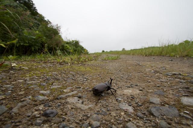 http://chinoken.net/wordpress/wp-content/images/mt_images/2011/20110910_10.jpg