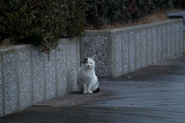 http://chinoken.net/wordpress/wp-content/images/mt_images/2011/20120121_02.jpg